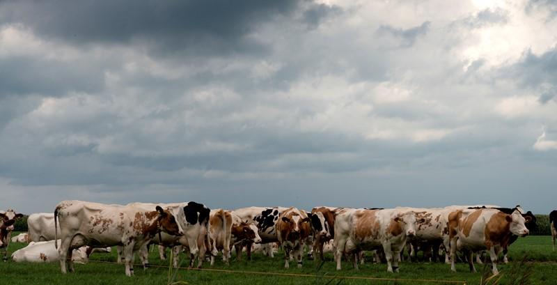 Fosfaatrechten en de voorzienbaarheid: een never ending story?