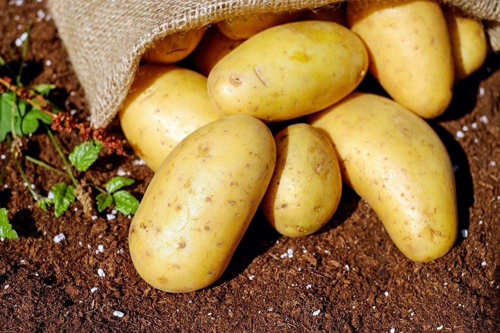 € 600 miljoen voor de sierteeltsector en delen van de voedingstuinbouw